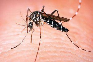 Većina zaraženih groznicom Zapadnog Nila NI NE ZNA DA IMA VIRUS, a ako imate simptome nalik prehladi posetite lekara