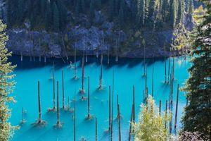 Najčudnija šuma na svetu u kojoj drveće raste naopako