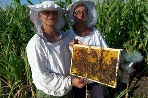DRŽAVA PONOVO SUBVENCIONIŠE PČELARE Jedna grupa ima posebnu prednost
