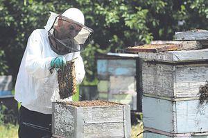 KVALITETOM DO NOVIH TRŽIŠTA Poziv na senzorno ocenjivanje meda, evo koji su uslovi