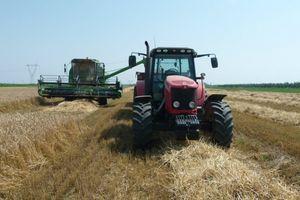 MANJI ROD PŠENICE OVE GODINE Očekuje se prinos od 4,5 tona po hektaru