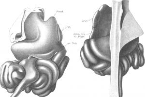 Najbolju knjigu o anatomiji stvorili su nacisti: I dalje je nezamenjiva kod nekih operacija